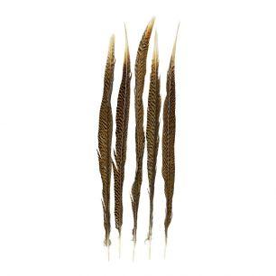 Plume faisan or 50cm (5pc.)