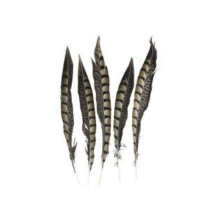 Plume faisan lady amherst 28cm (5pc.)