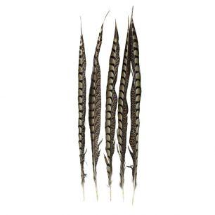 Plume  faisan lady amherst 50cm (5pc.)