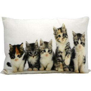 Toile coussin chatons 35x50cm